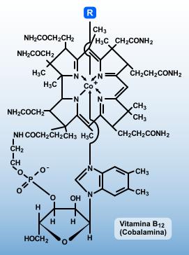 vitamina_B12 macrobiótica