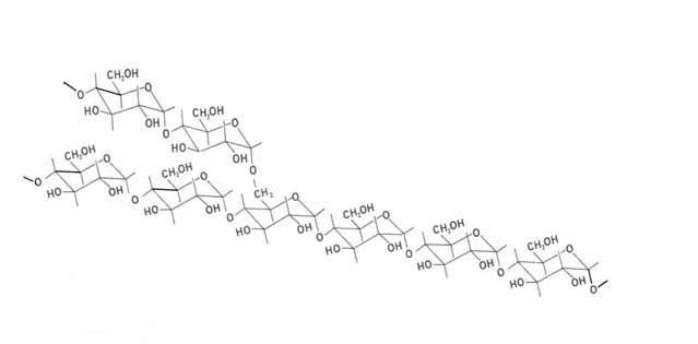 carbohidratos complejos y macrobiótica