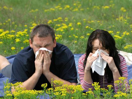 Macrobiótica mediterránea para la alergia primaveral