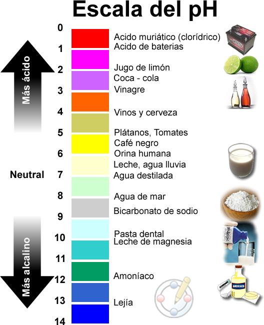 Escala-del-pH en macrobiótica