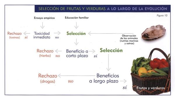 Selección de los alimentos que forman una dieta macrobiótica